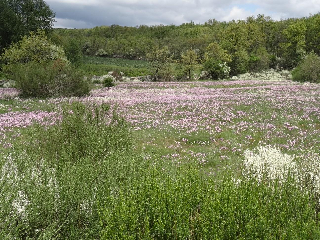 Tag 26, von Astorga nach Rabanal del Camino